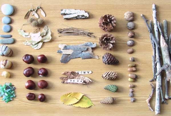 Сбор природного материала для поделок